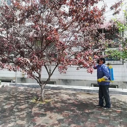 山艺校园绿化养护